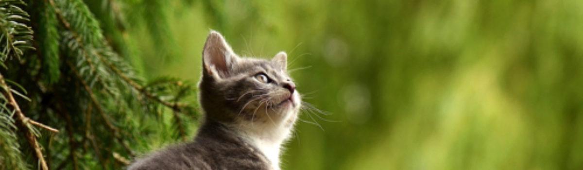 I gatti ci aiutano a vivere meglio.