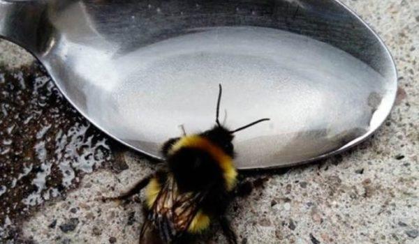 Ecco come salvare le api.